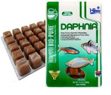hikari daphnia