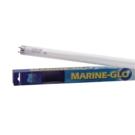 MarineGlo