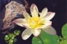 pond26