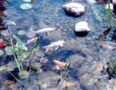 pond32
